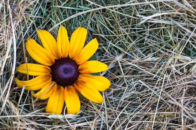 Foin de paille jaune avec fleur jaune