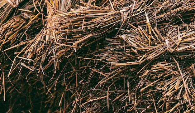 Foin séché ou paille avec grains