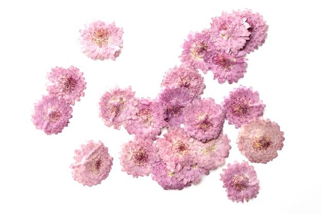 Fond abstrait fleur rose isolé sur blanc.