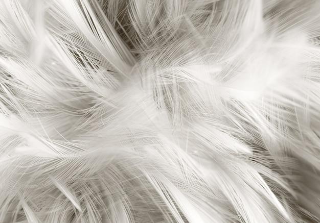Fond abstrait. fond de texture de plume grise.