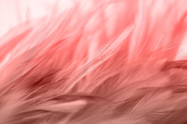 Fond abstrait de texture de plume de beaux poulets pour la conception, mise au point douce