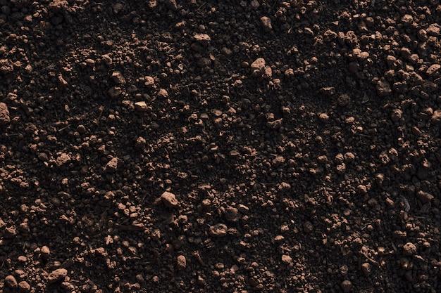 Fond approprié de sol de loam fertile