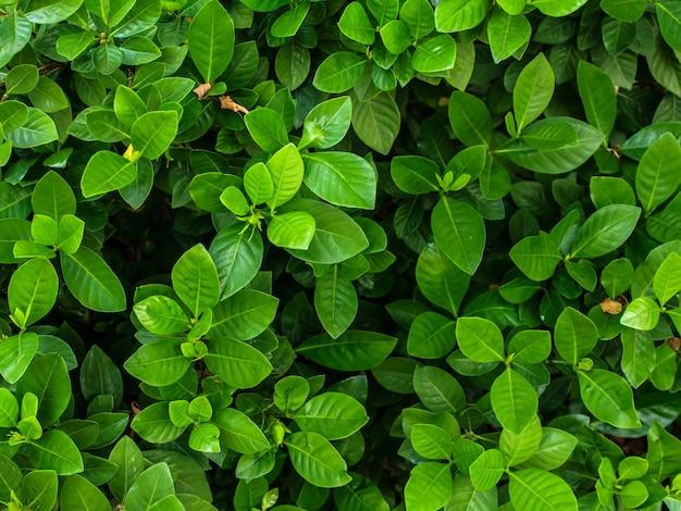 Fond d'arbre feuille verte