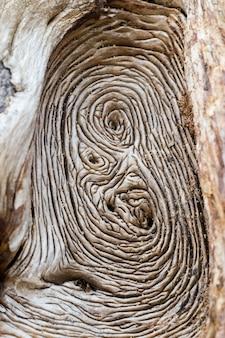 Fond d'arbre de macro. motif de texture en bois. artvin, turquie.