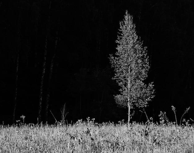 Fond d'arbre solitaire séparé