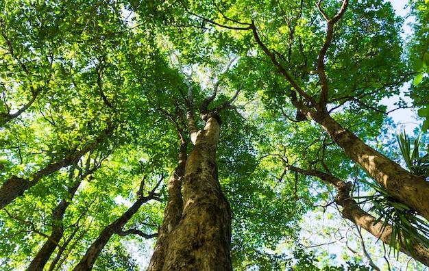 Fond d'arbre vert de la forêt.