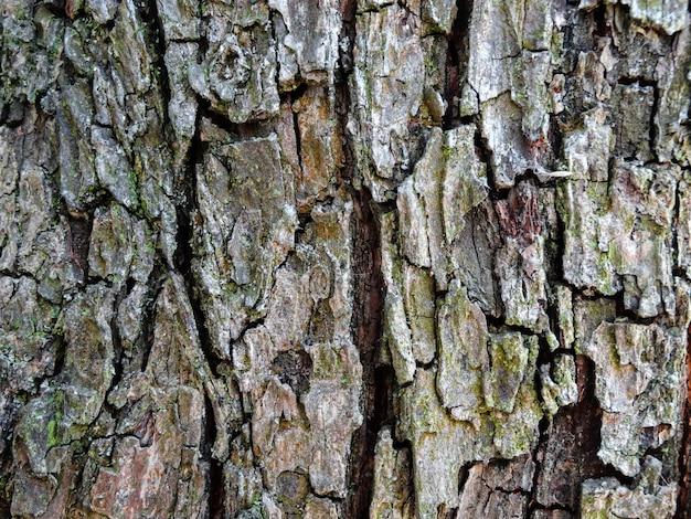Fond d'arbre