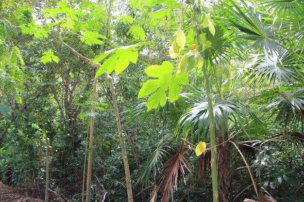 Fond de l'atmosphère verte forêt tropicale jungle
