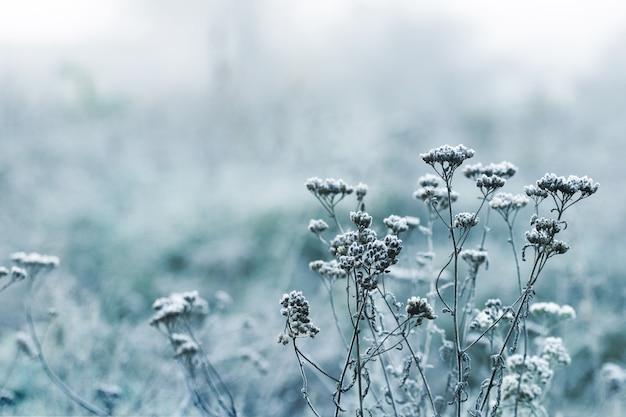 Fond atmosphérique d'hiver. tiges sèches couvertes de neige de plantes sur un arrière-plan flou en hiver