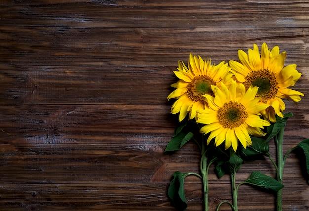 Fond d'automne aux tournesols
