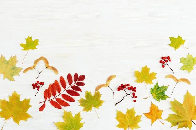 Fond d'automne, bois blanc avec de belles feuilles de saison automnale jaune et rouge d'érable et de sorbier. copiez l'espace. vue de dessus.