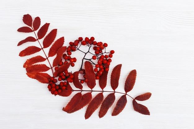 Fond d'automne, bois blanc avec des feuilles de saison d'automne rouge sec d'arbre à sorbier et de baies. copiez l'espace. vue de dessus.