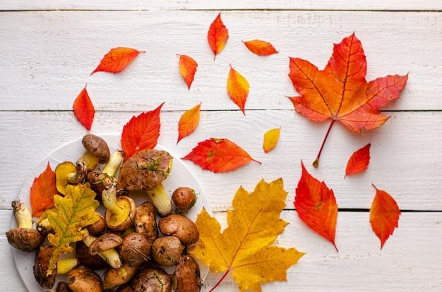 Fond d'automne coloré champignons gras comestibles fraîchement récoltés sur un fond en bois blanc décoré de feuilles mortes