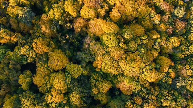 Fond d'automne doré, vue aérienne du paysage forestier avec des arbres jaunes d'en haut