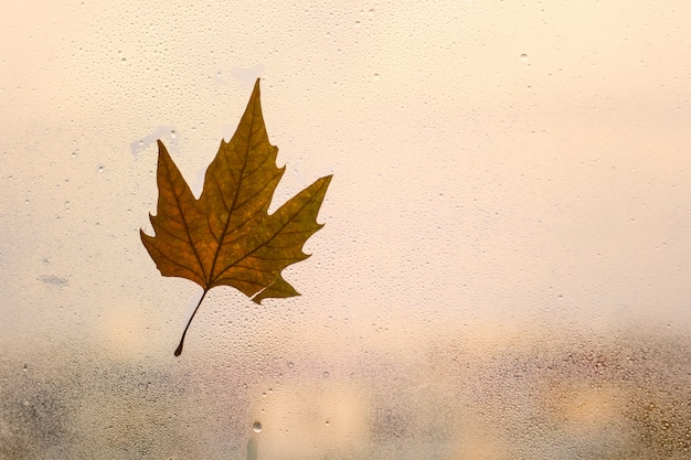 Fond d'automne avec une feuille d'érable sur une fenêtre avec une goutte de pluie