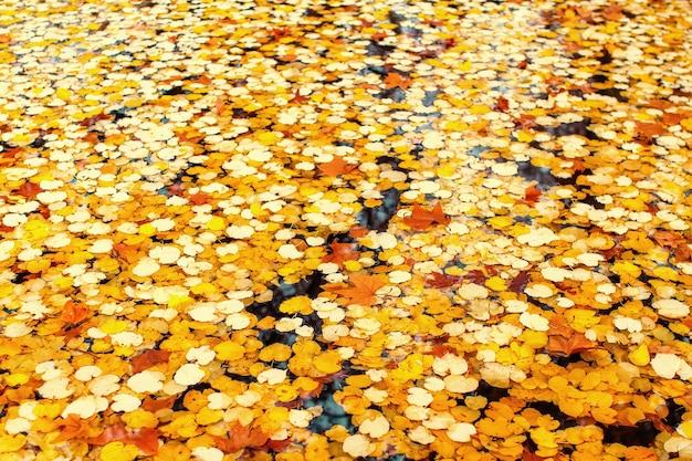 Fond d'automne - feuilles d'automne sur l'eau