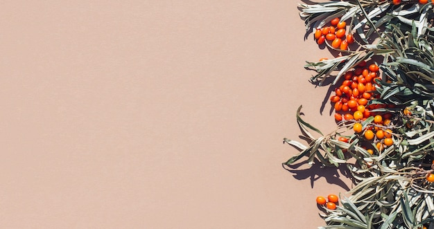 Fond d'automne de feuilles et de baies oranges d'argousier récolte des vitamines antioxydantes