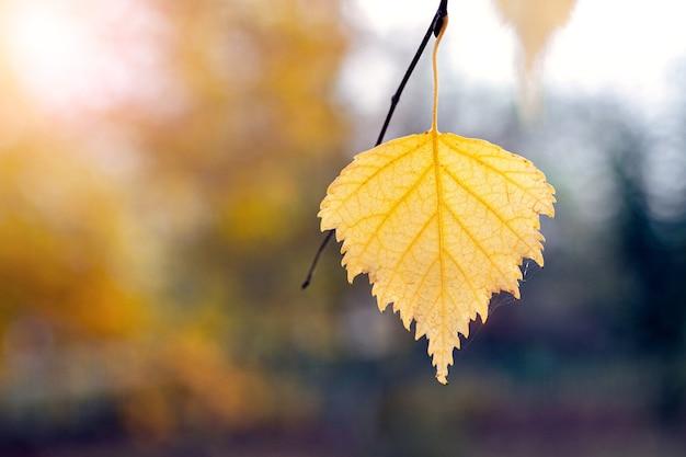 Fond d'automne avec des feuilles de bouleau colorées sur un arrière-plan flou, copiez l'espace