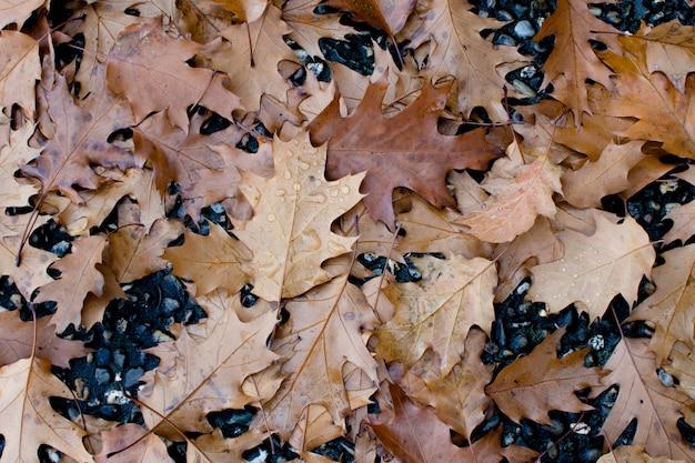 Fond d'automne, feuilles colorées après la pluie sur le sol