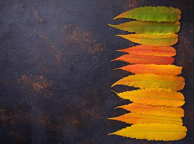 Fond d'automne avec des feuilles colorées