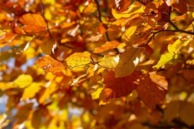 Fond d'automne de feuilles jaunes