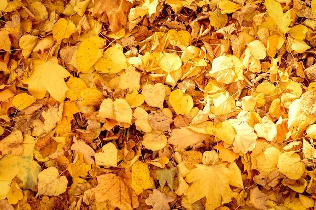 Fond d'automne feuilles tombées d'un érable et d'un bouleau. feuillage d'automne jaune et orange au sol. vue de dessus