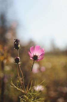 Fond d'automne avec des fleurs dans le jardin