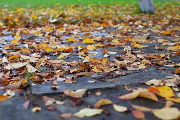 Fond d'automne naturel fond d'automne de feuilles jaunes tombées sur un chemin de pierre et d'herbe verte de...