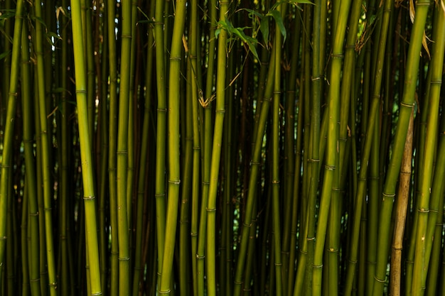 Fond de bambou frais