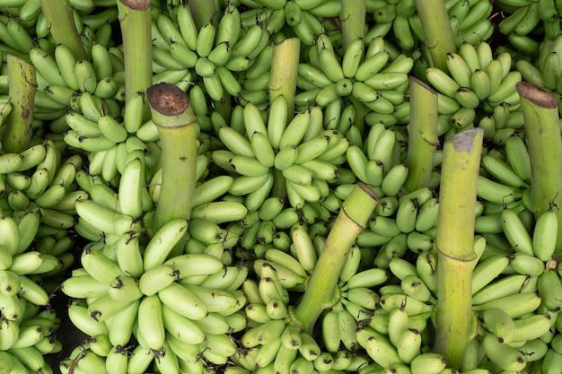Fond de banane verte