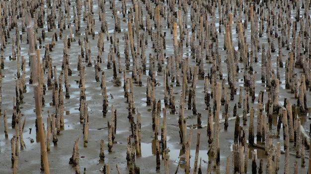 Fond de barrage de bambou