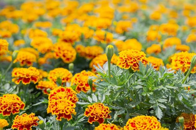 Fond de belle fleur colorée.