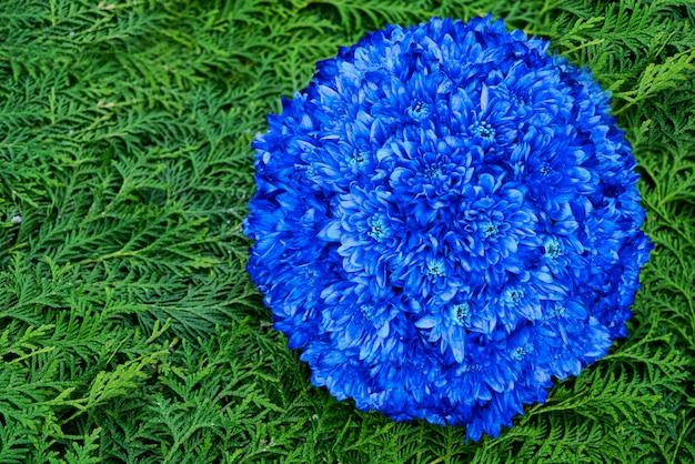 Fond de belles fleurs bleues et vertes. fleurs d'aster,