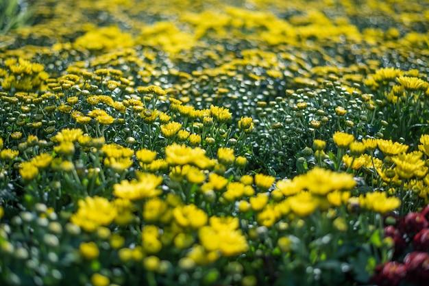 Fond avec de belles fleurs jaunes