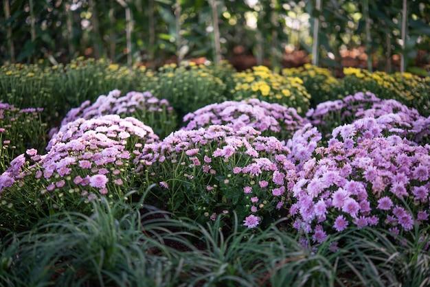 Fond avec de belles fleurs violettes