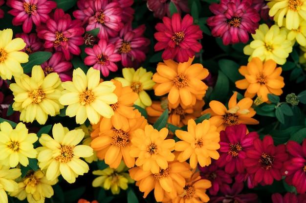 Fond de belles fleurs.