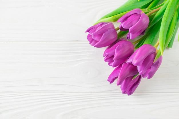 Fond de belles tulipes pourpres fraîches sur tableau blanc, carte de vœux