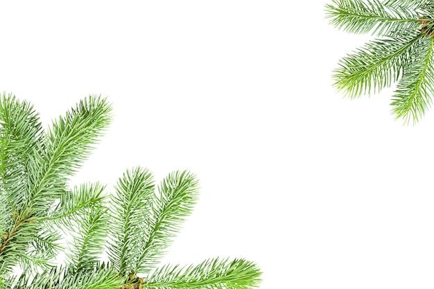 Fond blanc avec un cadre de branches de sapin isolé sur blanc avec espace de copie.