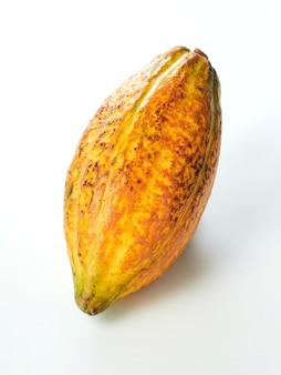 Fond blanc de cosses de fruits de cacao frais