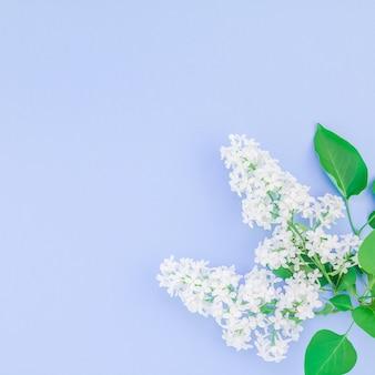Fond bleu avec des fleurs lilas blanches
