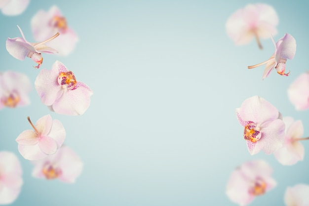Fond bleu tropical de l'été avec la chute des fleurs d'orchidées