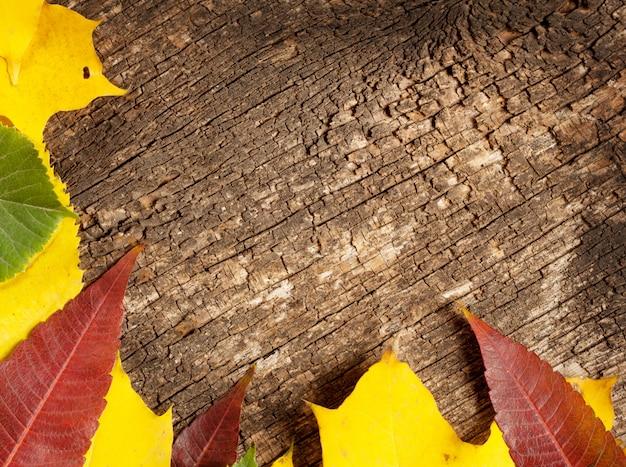 Fond en bois avec des feuilles d'automne