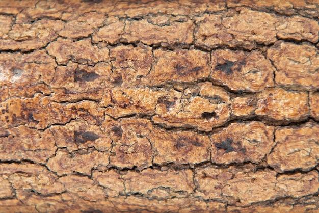 Fond en bois naturel. texture du bois. texture du bois pour la conception et la décoration.