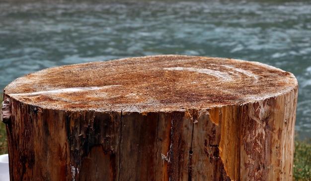Fond en bois de surface d'arbre