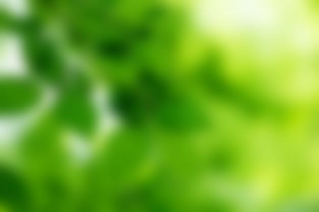 Fond de bokeh vert et lumière du soleil