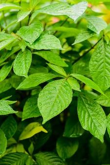 Fond de bouchent les feuilles vertes dans le jardin