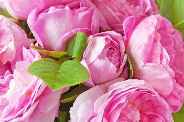 Fond de bouquet de roses roses, gros plan