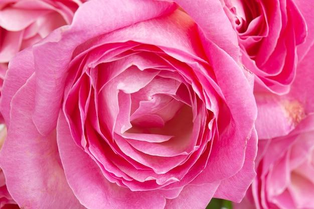 Fond de bouquet de roses roses