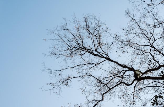 Fond de branche sèche.