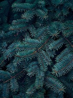 Fond de branches d'arbres de noël